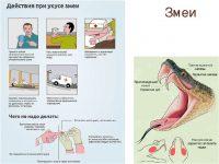 Что делать при укусе змеи первая помощь